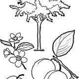 drzewo-lisc-do-wydrukowania (3)