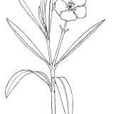 kwiaty-kolorowanki (3)