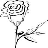 kwiaty-kolorowanki (4)