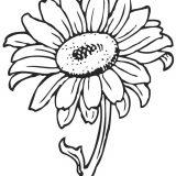 kwiaty-kolorowanki (7)