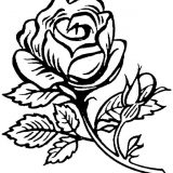 kwiaty kolorowanki do druku dla dzieci (1)