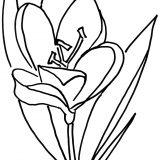 kwiaty kolorowanki do druku dla dzieci (23)