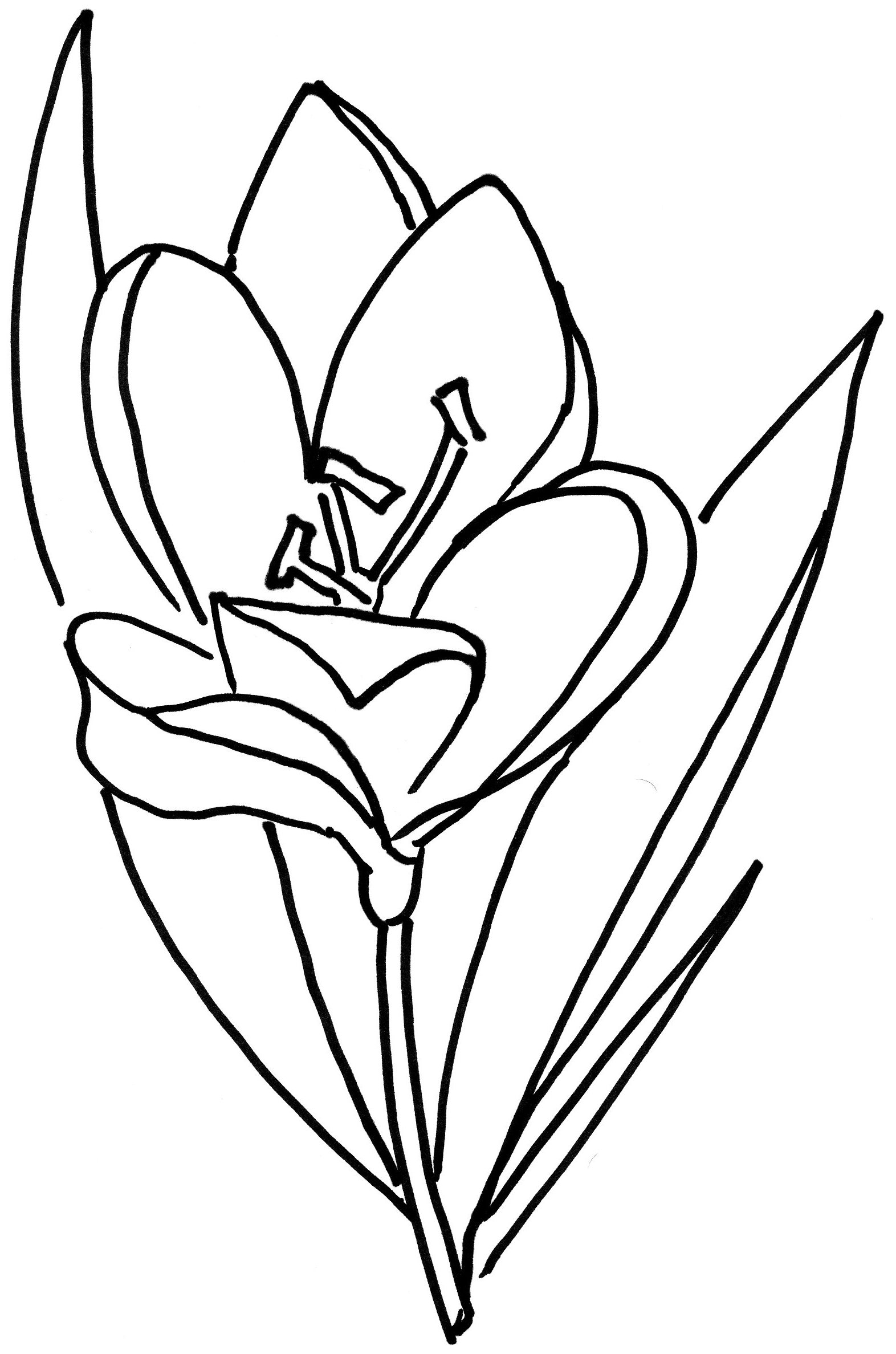 Kwiaty Kolorowanki Do Druku Dla Dzieci 23 Fd