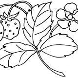 kwiaty kolorowanki do druku dla dzieci (24)