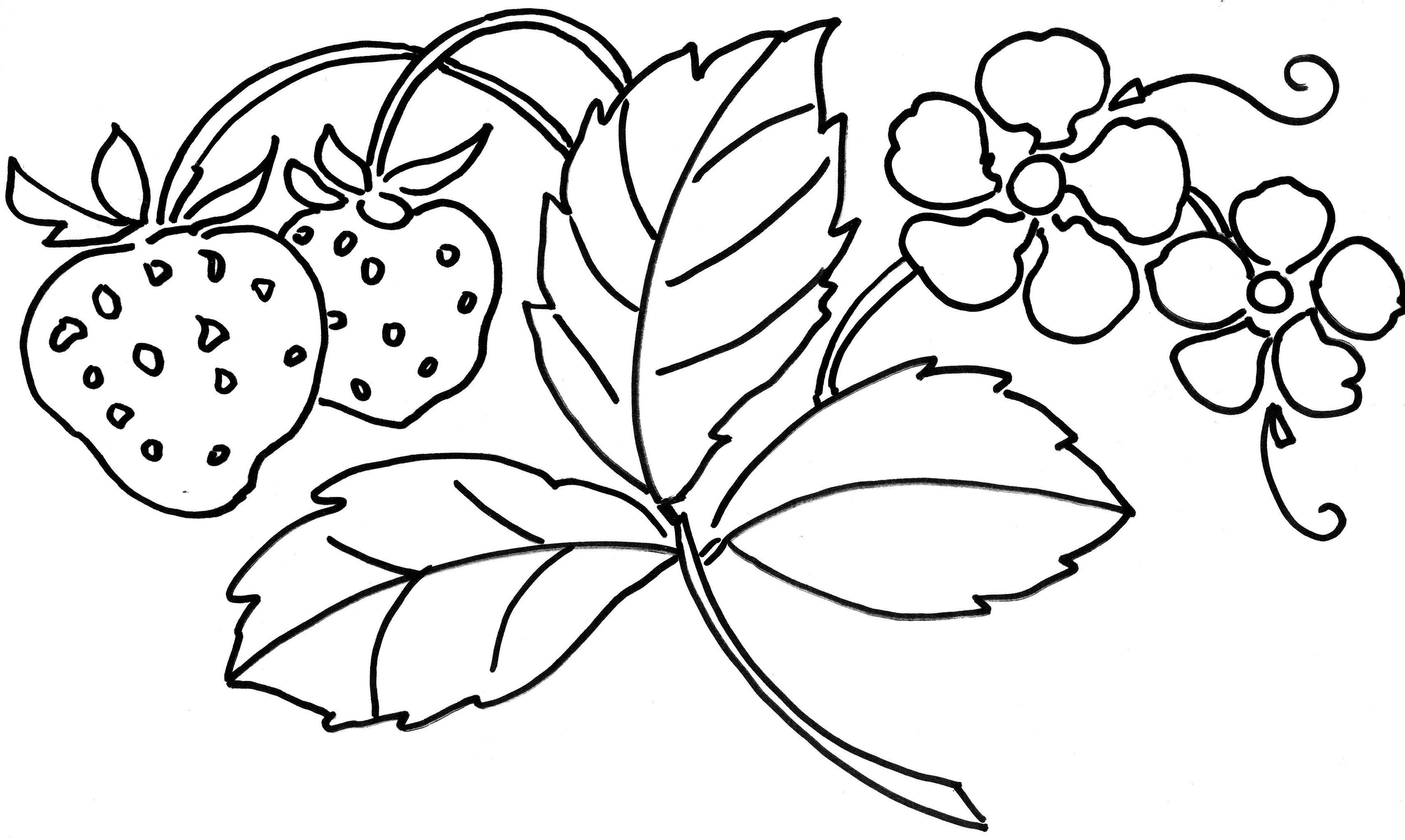Kolorowanki Kwiaty Malowanki Do Druku Fd