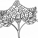 kwiaty kolorowanki do druku dla dzieci (25)