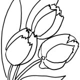 tulips-flower-coloring-page