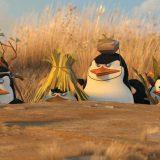 pingwiny z madagaskaru (15)