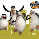 pingwiny z madagaskaru (17)