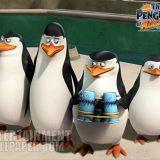 pingwiny z madagaskaru (18)