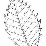 drzewa liscie malowanki (7)