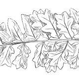 rosliny malowanki kolorowanki (3)