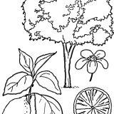 rosliny malowanki kolorowanki (8)