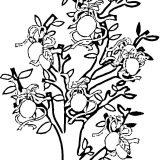 rosliny malowanki kolorowanki (9)