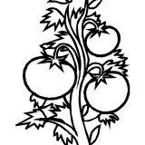 warzywa- kolorowanki (19)