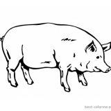 krowy-swinie-do-wydrukowania (1)