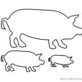 krowy-swinie-do-wydrukowania (11)