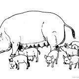 krowy-swinie-do-wydrukowania (12)