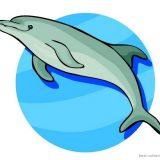 delfini-10