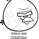 angry-birds (16)