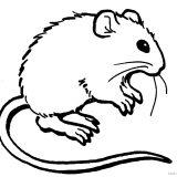 myszka-jez-kolorowanki-do-druku (3)
