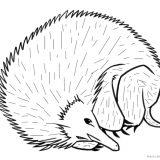 myszka-jez-kolorowanki-do-druku (7)