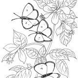 do-wydruku-motyl