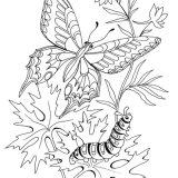 malowanka-motyl