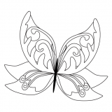 motyl (1)