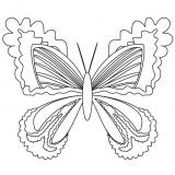 motyl (2)