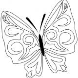 motyl (4)