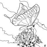 Motyl do pomalowania