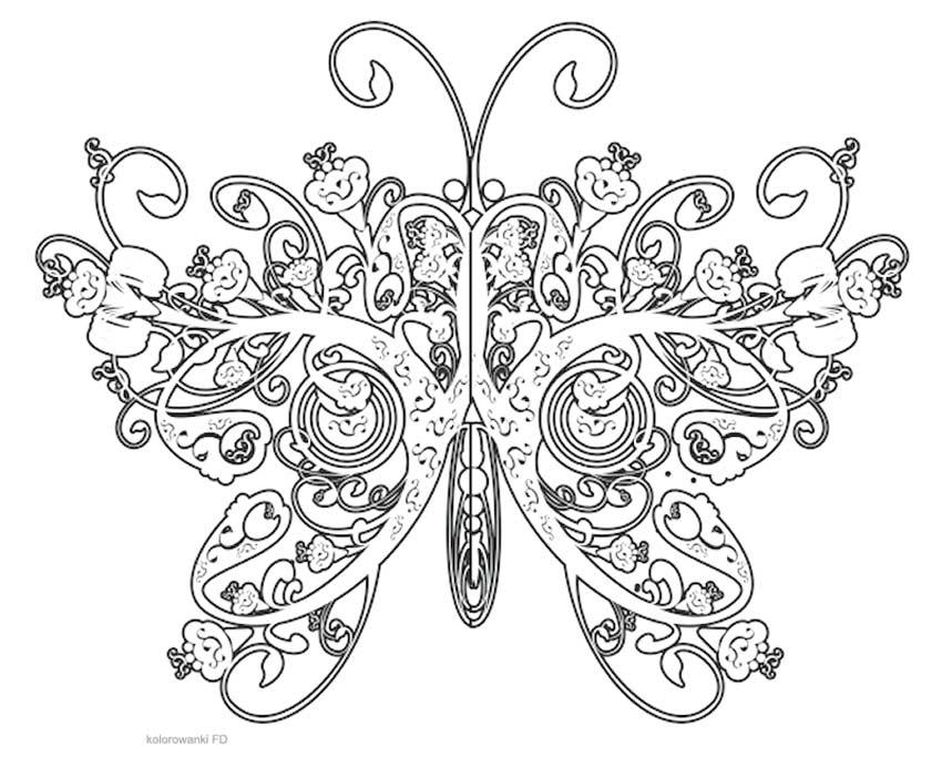 Motyle FD