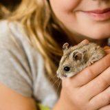 male-zwierze-dla-dziecka (2)