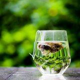 Lecznicze właściwości herbatki z kopru włoskiego