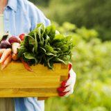 Żywność ekologiczna to już świadomy wybór a nie moda