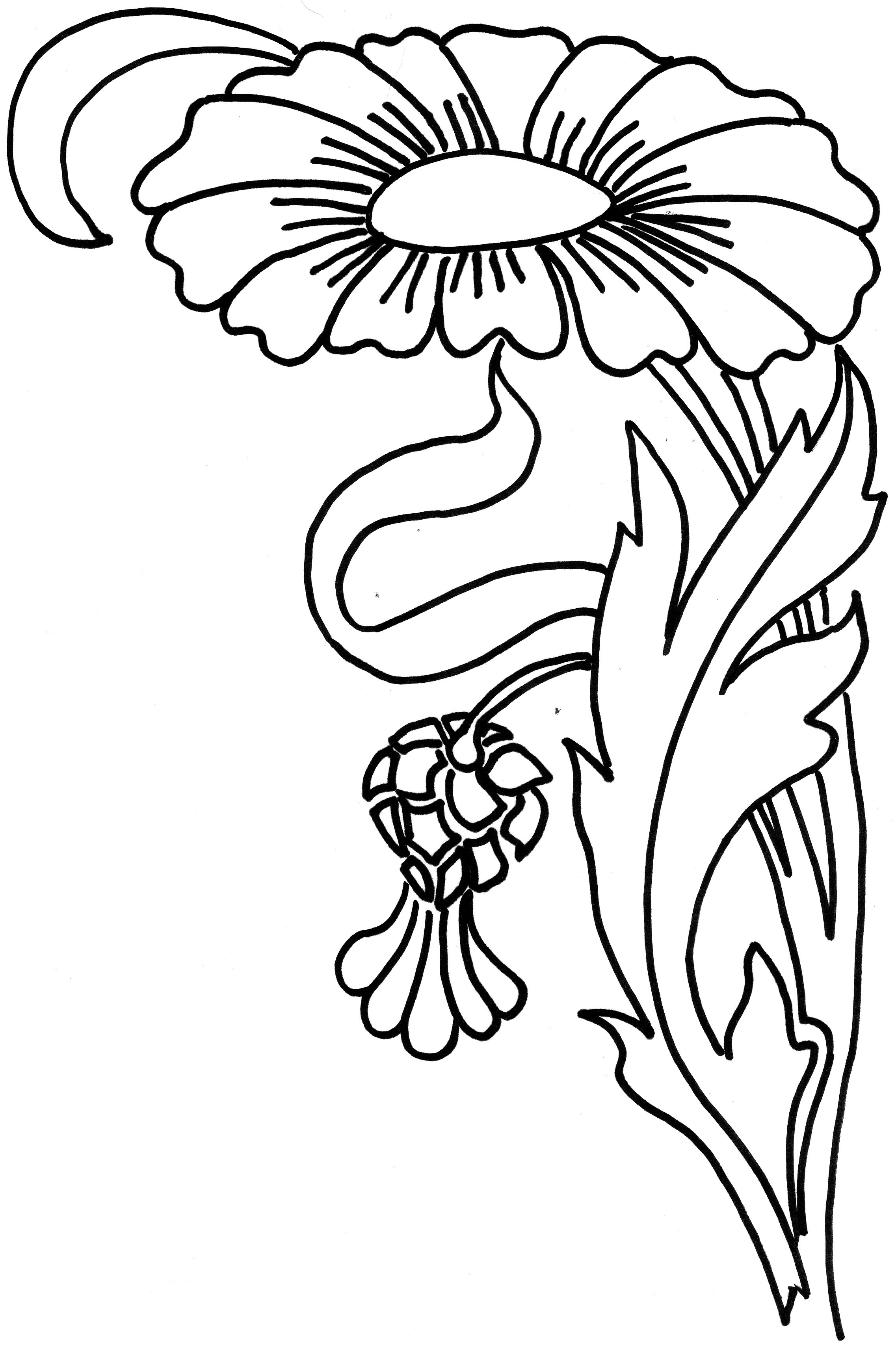 zinni petal coloring pages - photo#15