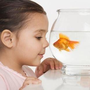 male-zwierze-dla-dziecka (3)