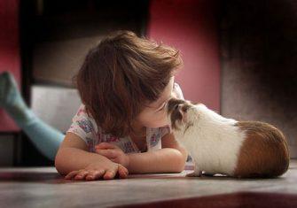 male-zwierze-dla-dziecka (4)
